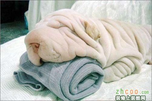 冬季毛毯的选购及保养常识