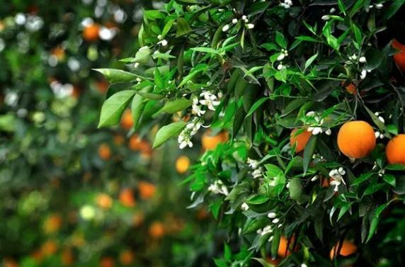 住宅风水:庭院种什么树好看也吉利